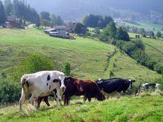 Les Vosges, Lorraine  France