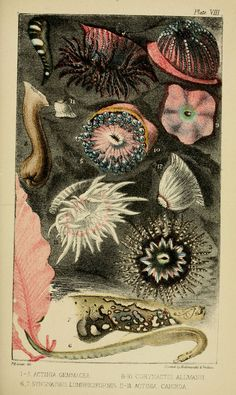 A Naturalist's Rambles on the Devonshire Coast, John Van Voorst  1853