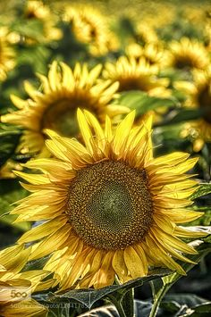 Yellow by szfefe69. Please Like http://fb.me/go4photos and Follow @go4fotos Thank You. :-)