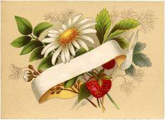 Vintage Strawberry Label Image