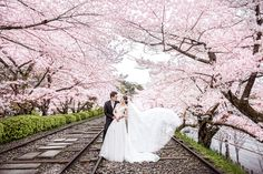 Our teams expert on wedding day photography & Overseas pre-wedding photographers based out of Hong Kong. Pre Wedding Photoshoot, Wedding Shoot, Wedding Bride, Wedding Engagement, Engagement Photos, Post Wedding, Dream Wedding, Cherry Blossom Wedding, Pink Blossom