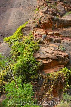 Beautiful Photos of Zion's National Park!