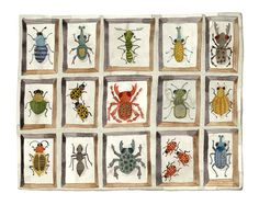 Golly Bard's Drawing Room: Beetles and Weevils Reprise