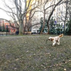 http://washingtonsquareparkerz.com/yichinglin-fetch-washingtonsquarepark-nyc/   @yichinglin #fetch #washingtonsquarepark #nyc