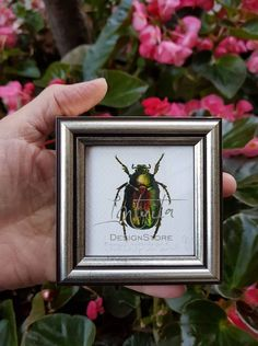 Tiny Green Rose Chafer Framed Giclée Print Isosceles Triangle, Unique Gifts, Handmade Gifts, Green Rose, Bird Prints, Printing Process, Giclee Print, Watercolor Paintings, Digital Prints
