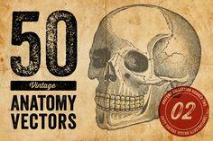 50 Vintage Anatomy Vectors