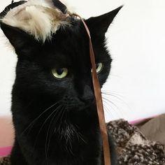 Let's play! 😏#mygreatcat #my_loving_pet #cat #gatto #catoftheday #catsofinstagram #catstagram #gatti #instacat #instacat_meows #bestmeow #topcatphoto #miao #catlover #gatto #catoftheday #katze #gato #chat #猫  #neko #猫好き #Exellent_Cats #子猫 #プッシーキャット #ニャー #甘い #愛猫