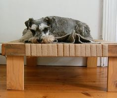 DIY dog bed - perfect place for the pup OR for her bagel bed + the pup