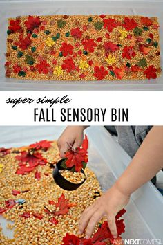 Love how simple this fall sensory bin is! #fallactivities #kids #kidsactivities #sensory #sensoryplay #sensorybin