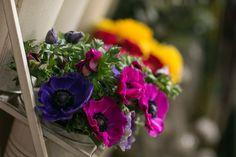Anemone Plants, Planters, Plant, Planting