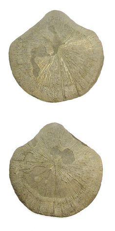 Pyrite 181096: Sun Pyrite 200Gram Golden Shining Uneven Shape Loose Specimen Gemstone Er11449 -> BUY IT NOW ONLY: $30 on eBay!