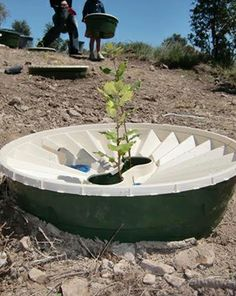 Support Our Mother Gaia and Plant Trees! Groasis by AquaPro Waterboxx website