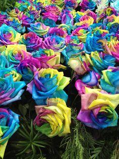 Rosas multicolores. Cultivadas en Choachí, Cundinamarca
