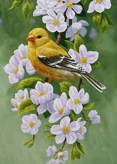 Goldfinch and apple blossoms painting by Crista Forest