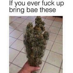Instant forgiveness! Repinned by Fun Weed Pics @funweedpics