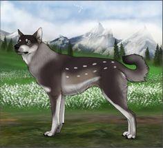 Asmundr wolf