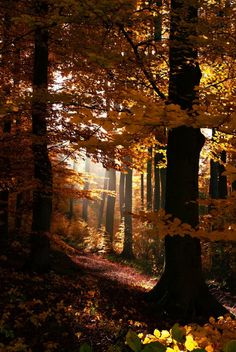 An Afternoon In Autumn: September 17, 2015 at 02:42PM