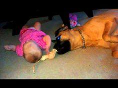 Baby and Bullmastiff playing