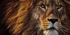 Rare Cat Breeds, Apex Predator, Like A Lion, Copyright Music, Baboon, Animal Facts, Cheetahs, Hyena, African Culture