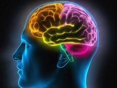 Brain Power: Learn how the brain controls emotions and how it emotionally flexible an organ it can be. Detailed Infographic explains the brain and it's emotions. Auditory Processing Disorder, Vagus Nerve, Headache Relief, Anxiety Relief, Brain Health, Uk Health, Health Tips, Blood Vessels, Alzheimers