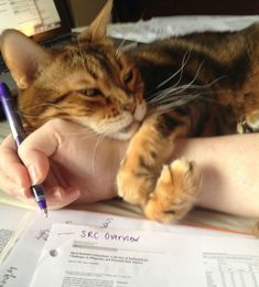 "awwww-cute: ""Here, let me help you with your work."" (this is much more like my furrygirl with the ""helping"")"