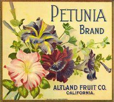 Rabbit Carrots Crate Label Lettuce Sunland Farms Vintage Poster Repro FREE S//H