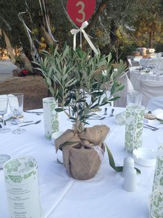 Olive tree centerpiece.