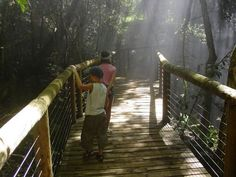 guided tours monkeyland birds of eden wildlife sanctuary attraction plettenberg bay the crags south africa Places Ive Been, Places To Visit, Tour Guide, South Africa, Attraction, Tourism, Road Trip, Wildlife, Bird Aviary