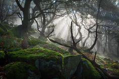Ancient woodland, Peak District, UK