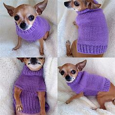 Simple dog sweater, easily adaptable to any size dog. Knit completely in the round except for bottom of back, which is knit back and forth after completion of the belly. Knitting Patterns For Dogs, Crochet Dog Sweater Free Pattern, Dog Coat Pattern, Knit Dog Sweater, Dog Clothes Patterns, Crochet Pattern, Small Dog Coats, Small Dog Sweaters, Small Dog Clothes
