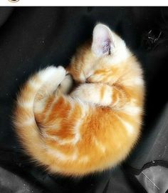 I want kitty #ginger #kitty #cat #lovely #pet #sweet #amazing #beautiful #loveanimals #love #instagood #cats