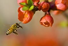 10 Trees That Bees Love Best: 10 Best North American Trees for Bees
