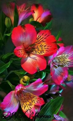 Most Beautiful Flowers, Exotic Flowers, Pretty Flowers, Colorful Flowers, Beautiful Gorgeous, Cut Flowers, Tropical Flowers, Hawaiian Flowers, Purple Flowers