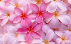 Tropical Plumeria. Free Wallpaper download.jalen says looks like the flower of life