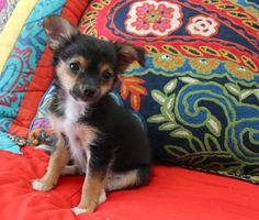 if everything goes as planned on wednesday at the SPCA we are adding a new addition to our family!!! her name is Brandi