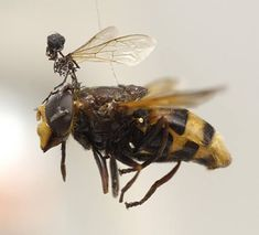 Tessa Farmer makes tiny 'people' who ride on insects - amazing