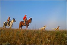 South Dakota Prairie Chickens and Sharptailed Grouse by Horseback Grouse, South Dakota, Shotgun, Camel, Hunting, Animals, Life, Animales, Animaux