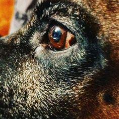 #agnieszkaandpatryk #dog #dogs #poznan Panther, Dog, Cats, Animals, Diy Dog, Gatos, Animales, Animaux, Panthers