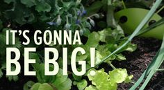 We've got something growing... Sprout it for #Android is coming soon! Sign up with for our Get Ready for Android campaign, share your unique URL and you could win $200 towards your next new phone! #gardening #app
