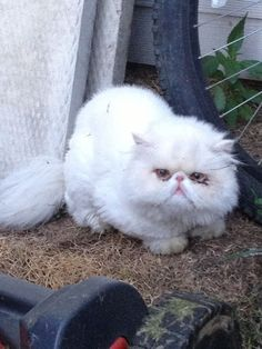 Pam Burbank-KostyniukKlassic Kennels June 26   This cute little guy has been hanging out at my house all day. I would like to see it returned to it's owner. If you know who this cat may belong to me, you can message me on FB.