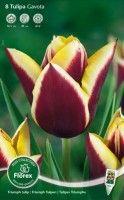 Gavota is een mooie tweekleurige tulp. Planttijd: september-december Bloeitijd: april-mei Bestel deze tulp en vele andere bloembollen bij huisentuinkado.nl