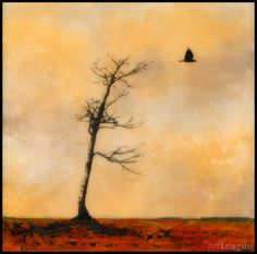 Mixed media art of bare tree with lone crow. encaustic painting with photography. Jeff League.