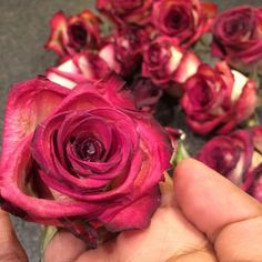 How to preserve roses and other flowers - I wish I would have known about this!