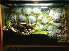 Crumbling wall vivarium for frogs. Aquarium Setup, Aquarium Design, Aquarium Fish Tank, Planted Aquarium, Fish Tanks, Terrariums, Gecko Terrarium, Terrarium Reptile, Reptile Room