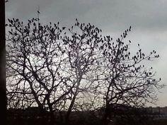 Migrano gli uccelli...migrano!