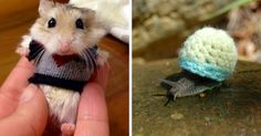 15+ Tiny Animals In Tiny Sweaters That Will Make You Go Aww | Bored Panda