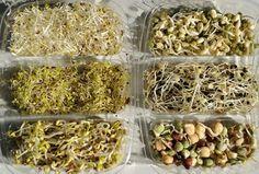 Los germinados o brotes tienen muchas propiedades terapéuticas, según la semilla germinada, y también tienen muchísimas posibilidades a nivel culinario. Los germinados son brotes llenos de vitalidad. Su excepcional cantidad de nutrientes los hace indispensables en una dieta sana, además de aportar su sabor a numerosos platos. Cualidades de los germinados Si diéramos un valor ...