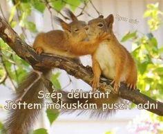 Kangaroo, Humor, Animals, Modern, Fluffy Animals, Baby Bjorn, Animales, Trendy Tree, Animaux