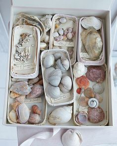 Shells everywhere...
