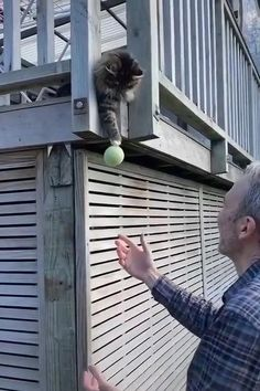 Cute Kittens, Funny Cute Cats, Cute Funny Animals, Cute Baby Animals, Animals And Pets, Wild Creatures, Cute Creatures, Cute Animal Videos, Funny Animal Pictures